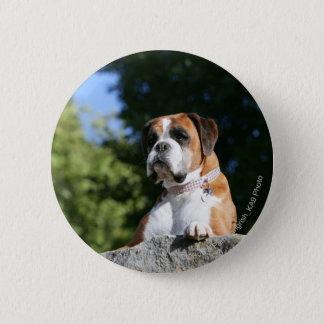 Boxarehund som lägger på en sten standard knapp rund 5.7 cm