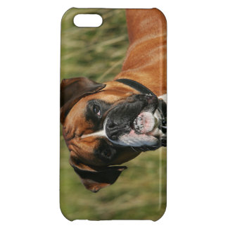 Boxarehund som stirrar på kameran iPhone 5C mobil skal