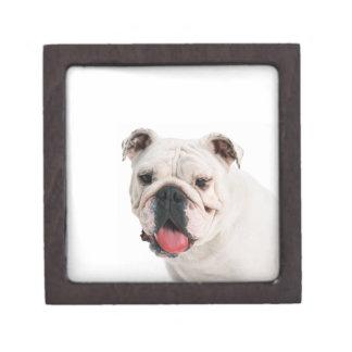 Boxas den högvärdiga gåvan för bulldoggen premie minnesask