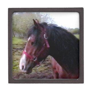 Boxas den högvärdiga gåvan för hästen premie presentförpackning