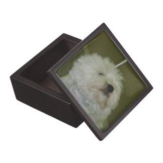 Boxas den högvärdiga gåvan för Scottiehunden Premie Prydnadslåda