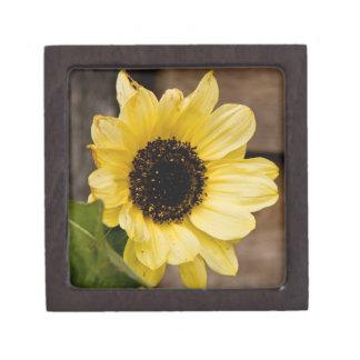 Boxas den högvärdiga gåvan för solrosen premie presentförpackningar