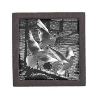 Boxas den högvärdiga gåvan för tre fåglar premie presentförpackningar