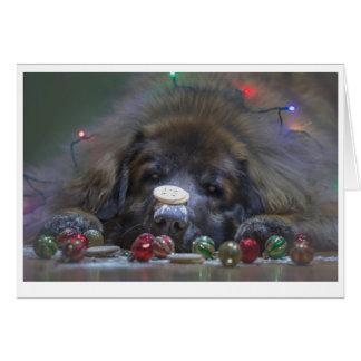 Bra Leonberger julkort Hälsningskort