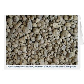 Brachiopod fossil från den Wenlock limestonen Hälsningskort