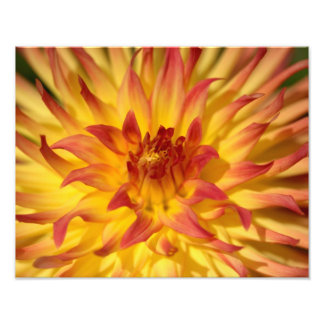 Brännhet gult och rött Dahliakonsttryck Fototryck