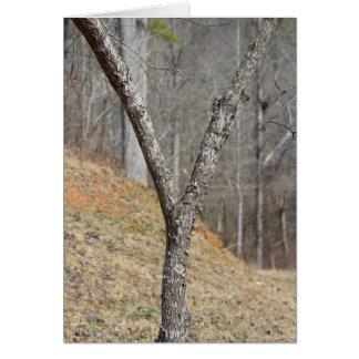 Brev Y som göras av ett träd OBS Kort