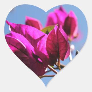 Briljant purpurfärgad Bougainvillea Hjärtformat Klistermärke