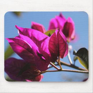 Briljant purpurfärgad Bougainvillea Mus Matta