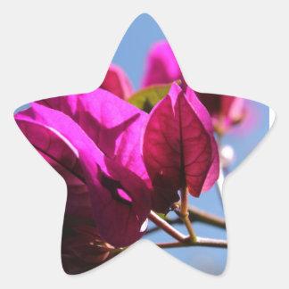 Briljant purpurfärgad Bougainvillea Stjärnformat Klistermärke
