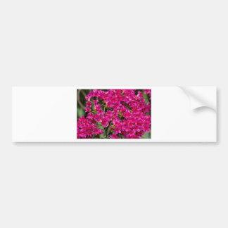 Briljant rosa vildblommor för raddor bildekal