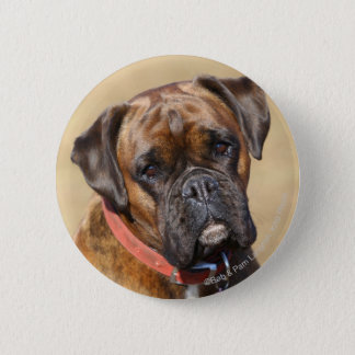 Brindle boxarehund standard knapp rund 5.7 cm