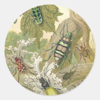 Brittiska skalbaggar runt klistermärke
