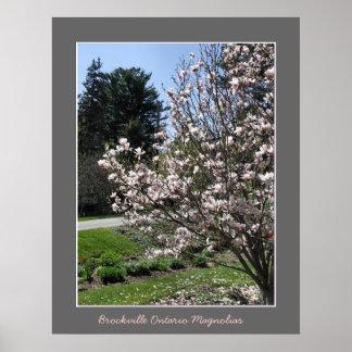 Brockville Ontario Magnolias Poster