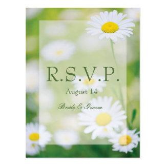 Bröllop OSA för sommar för daisydaisyblomma blom- Vykort
