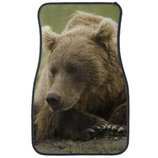 Brun björn eller kust- Grizzlybjörn, Ursus Bilmatta