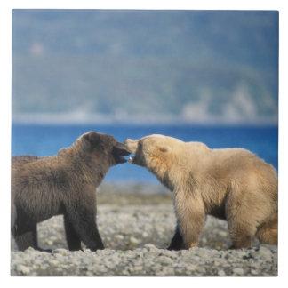 Brun björn, grizzlybjörn, lek på stranden, kakelplatta