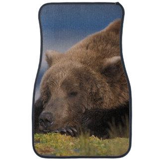 Brun björn, grizzlybjörn som tar en ta sig en bilmatta