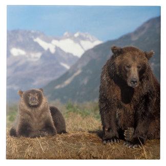 Brun björn, grizzlybjörn, sugga med ungen på kakelplatta