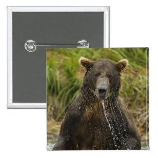 Brun björn, manlig som fiskar för lax standard kanpp fyrkantig 5.1 cm