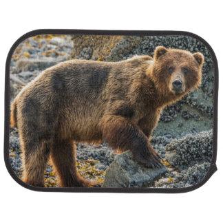 Brun björn på strand 2 bilmatta