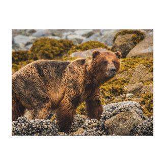 Brun björn på strand canvastryck