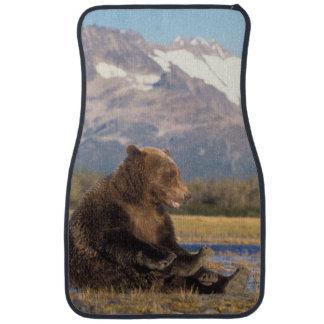 brun björn, Ursusarctos, grizzlybjörn, Ursus 2 Bilmatta