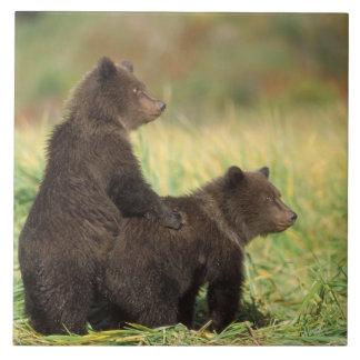 brun björn, Ursusarctos, grizzlybjörn, Ursus 2 Kakelplatta