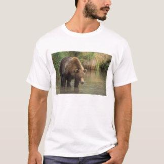 brun björn, Ursusarctos, grizzlybjörn, Ursus 3 Tee Shirts