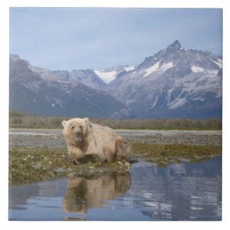 brun björn, Ursusarctos, grizzlybjörn, Ursus 4 Kakelplatta