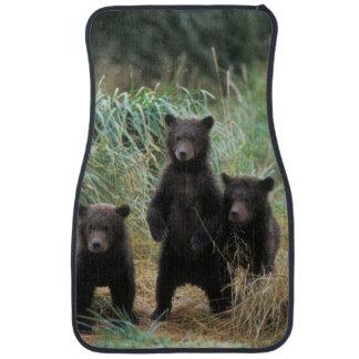 brun björn, Ursusarctos, grizzlybjörn, Ursus 7 2 Bilmatta