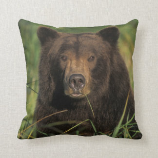 brun björn, Ursusarctos, grizzlybjörn, Ursus 9 Prydnadskudde