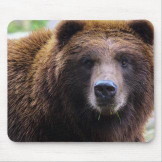 Brun Grizzlybjörn Mus Matta