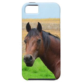 Brun häst i ett fält iPhone 5 skydd
