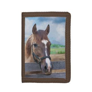 Brun häst med halteren