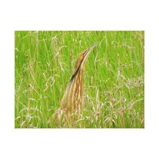Brun Heron och gräset Canvastryck