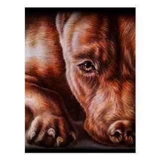 Brun pitbullansikteteckning av den älsklings- vykort
