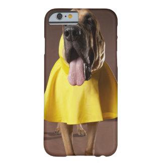 Brun spårhundhund som ha på sig den gula barely there iPhone 6 fodral
