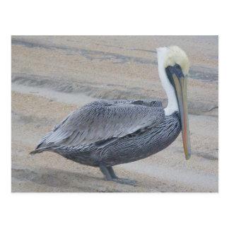 Brun vykort för pelikan OBX
