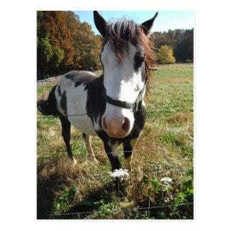 Brun &White, målad häst, blomma för drottningAnn Vykort