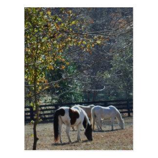 Brun &White målad häst och krämhäst Vykort