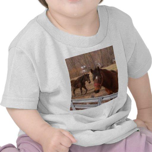 Bruna hästar t shirt