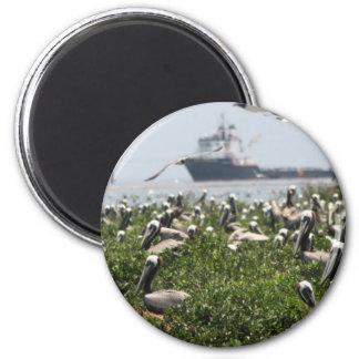 Brunt bygga bo för pelikan magnet