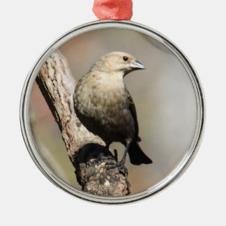 Brunt-hövdad Cowbird Julgransprydnad Metall