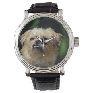 brussels-griffon.png