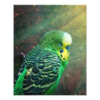 Budgie fågel flygblad