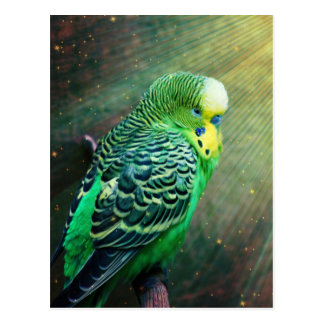 Budgie fågel vykort