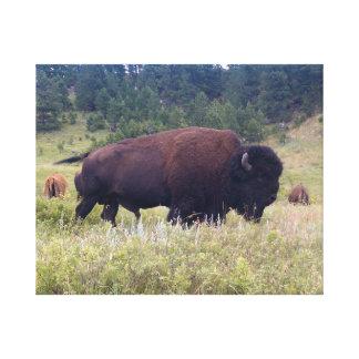 Buffel Canvastryck
