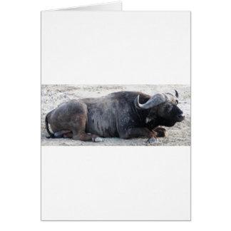 buffel hälsningskort