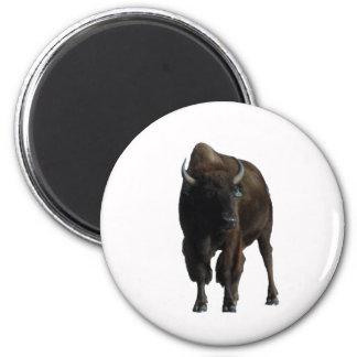Buffel Magnet